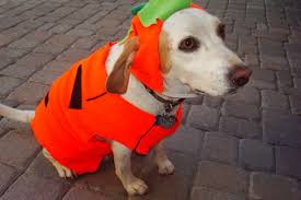 cute dog halloween costumes dog pumpkin costumes u2013 animals are best