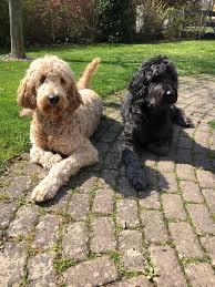 Gesundheitsamt Bad Kreuznach Dog Training Hundeschule Jens Strube Ihr Professionelles