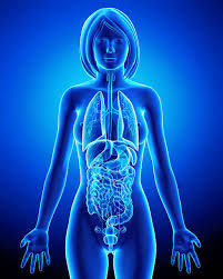 Human Body Female Anatomy Female Anatomy Pictures Images And Stock Photos Istock