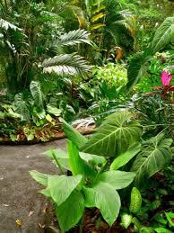 tropical gardens tropical garden features tropical plants and