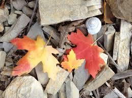 fall colors jake u0027s nature blog