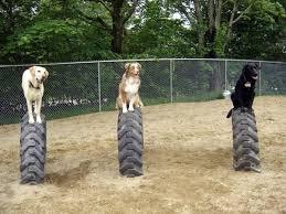 dog barn the yellow dog s barn barrington nh dog daycare supply store