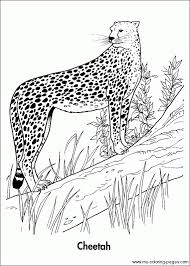 coloring pages magnificent animal planet coloring pages angry