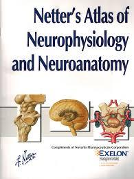 Discount Textbook Of Clinical Neuropsychology Amazon Com Neuroanatomy Basic Sciences Books
