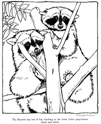 racoon coloring zoo animals pages 2 color
