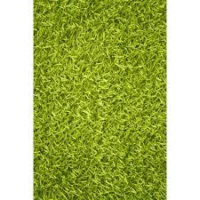 Colorful Shag Rugs Lime Green Shag Rugs Roselawnlutheran