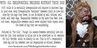 american pitbull terrier book pit bulls against misinformation help us stop the unethical and