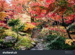 beautiful garden view all types maple stock photo 585209137