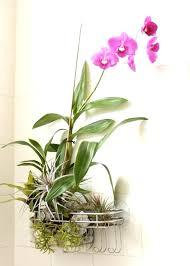 best low light indoor trees small indoor plant lights indoor plant grow lights light indoor