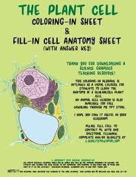plant cell biology coloring sheet and anatomy worksheet by