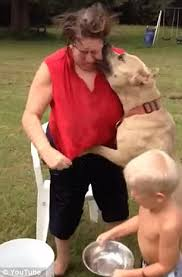 american pitbull terrier in bangalore moment pit bull launches attack on senior after als ice bucket