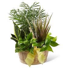 funeral plants funeral plants