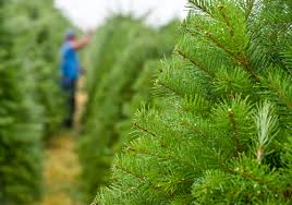 osu extension helps oregon s tree industry oregon