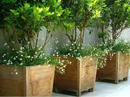 cheap plant pots melbourne easy outdoor planter ideas cheap