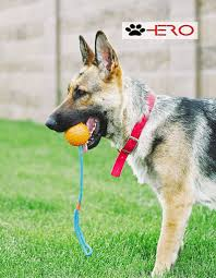 belgian shepherd exercise requirements german shepherd rottweiler mix breed facts information