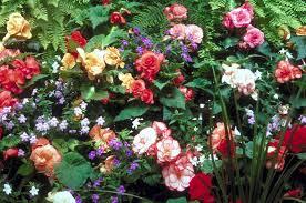 common edible flowers