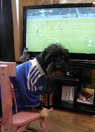 Armchair Supporter Premier League Dog Football Fans Chelsea Supporter Max The