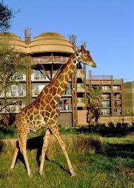 Disney U0027s Animal Kingdom Lodge Walt Disney World Resort