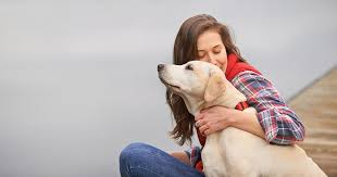 How To Get A Comfort Dog Akc Therapy Dog Program American Kennel Club