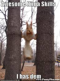 Bear At Picnic Table Meme - funny squirrel meme http www jokideo com amazing exotics