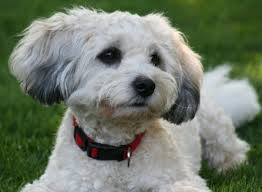 Types Of Dogs Different Types Of Dogs Breeds Dog Picture Litle Pups