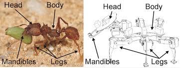 bill ant biologically inspired robotics