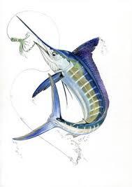 marlin tattoo kuta marlin clipart blue marlin photoshop and fish