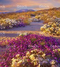 anza borrego desert state park california stock photo 481310259