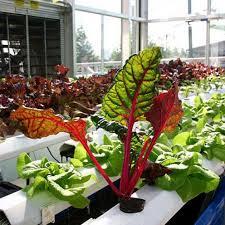 incredible indoor hydroponic vegetable garden build a hydroponic
