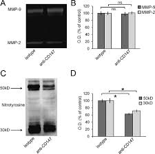disrupting the emmprin cd147 u2013cyclophilin a interaction reduces