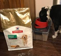 pet care is important and your pet needs healthy food to live a