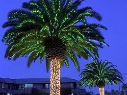 palm tree christmas tree lights palm tree christmas lights christmas decor inspirations