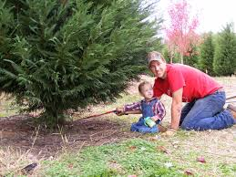 yule forest hwy 155 pumpkin patch christmas tree farm u2013 come