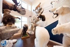 Polar Bear Fur Rug Furcanada Fur Blankets Fur Comforters Fur Carpets Fur Rugs