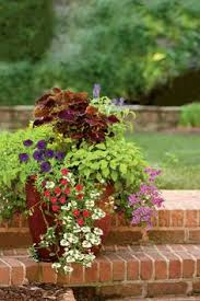 heat tolerant container gardens for sweltering summers evergreen
