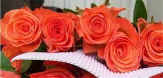 Fresh Cut Flowers Wholesale Fresh Cut Flower Buyer Fresh Anthurium Rose Yunnan All