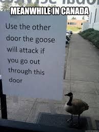 Goose Meme - canadian goose meme yahoo image search results random stuff