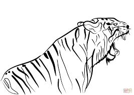 coloriage tigre coloriages à imprimer gratuits