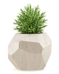 house plant in wooden pot u2013 gary u0027s garden