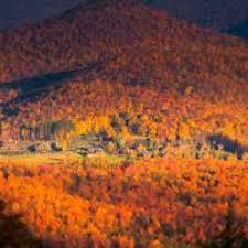 shrubs fall color dave u0027s garden