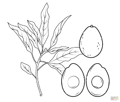 avocado branch whole avocado and cross section coloring page