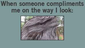 Funny Memes Gifs - funny gifs