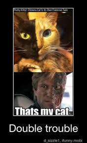 that s my cat meme by bekatice memedroid