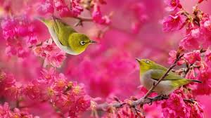 birds and flowers wallpaper download hd high resolution