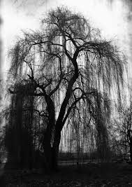 dead tree clipart weeping willow pencil and in color dead tree