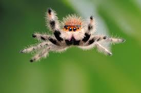Spider Bro Meme - lucas the spider playtime videos
