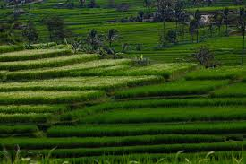 ubud bali where in the world are the brills
