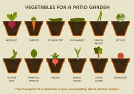 What To Plant In Spring Vegetable Garden by The Spring Allotment And Garden A Vegetable Growing Guide Cheat Sheet