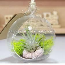 hand blow decor hanging glass ball air plant glass terrarium buy