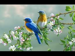 Flower And Bird - beautiful pictures of flowers and butterflies birds